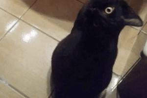 Tu vois un corbeau