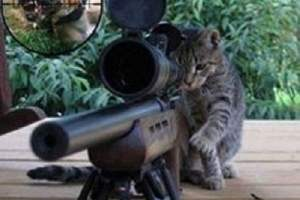 Un chat dans une mission impossible