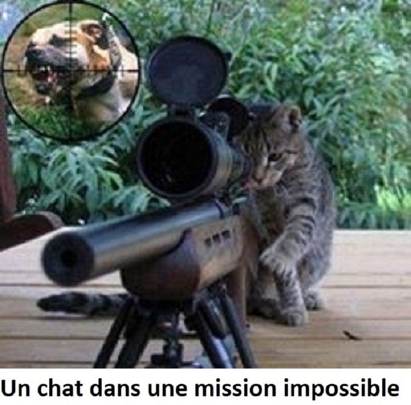 Un chat dans une mission impossible