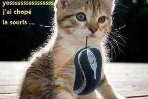 Yessssss J'ai chopé la souris