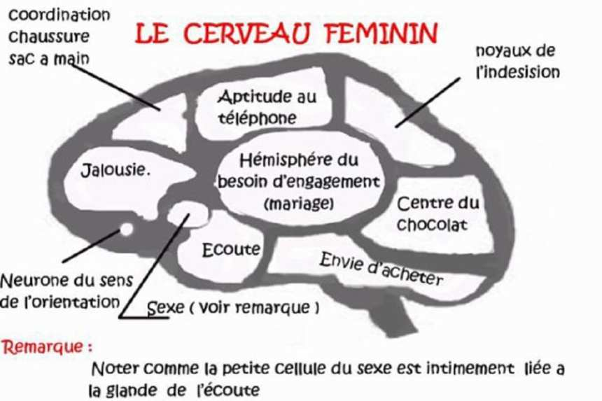 Le cerveau féminin