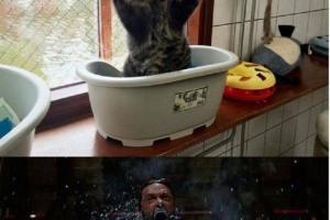 Mon chat me fait peur !!!!! Wolverine sort de ce corps !!!