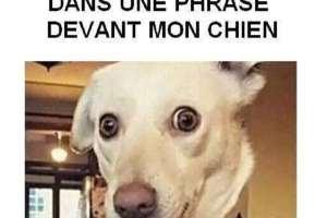 Quand je dis le mot promenade dans une phrase devant mon chien