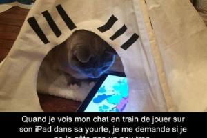 Quand je vois mon chat en train de jouer sur son iPad dans sa yourte