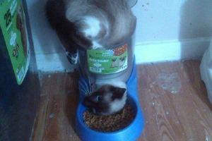 Le vétérinaire à dit que je devais changer ma façon de manger