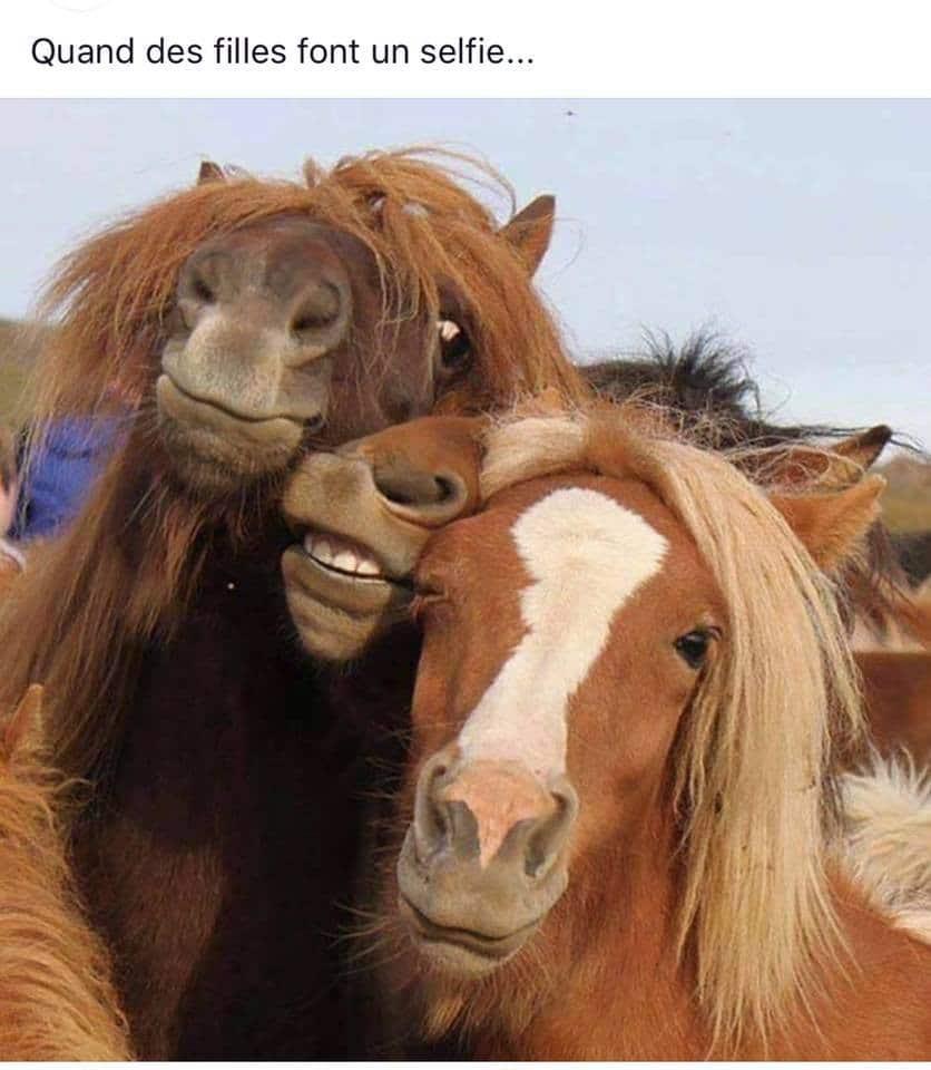 Quand des filles font un selfie