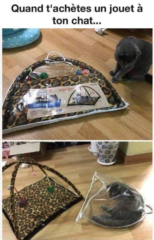 Quand tu achètes un jouet à ton chat