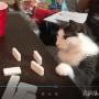 Un chat mauvais perdant