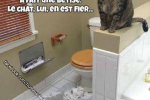 La différence entre les chats et les chiens