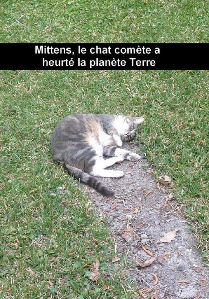Le chat comète a heurté la planète Terre