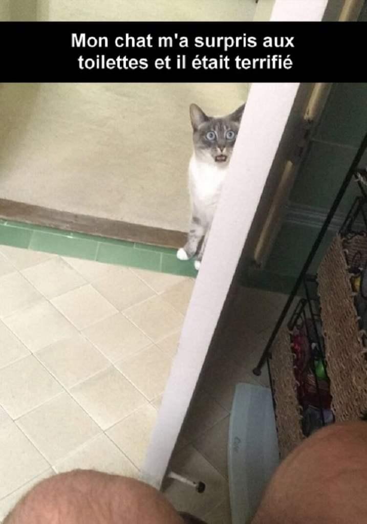 Mon chat m'a surpris aux toilettes