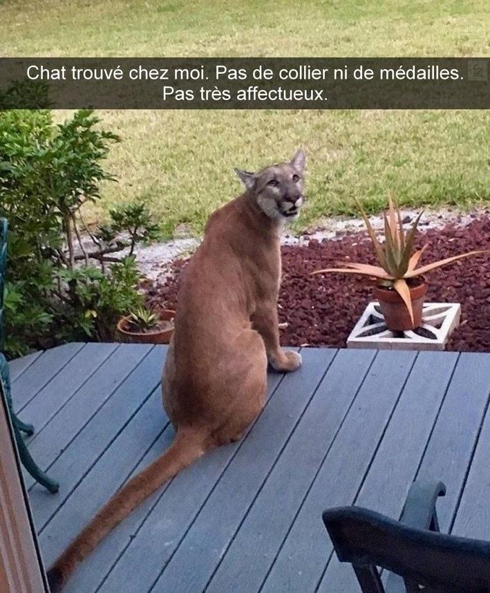 Chat trouvé chez moi. Pas de collier ni de médailles
