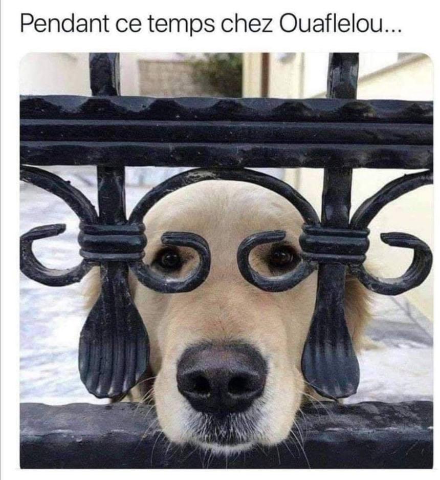 Pendant ce temps chez Ouaflelou …