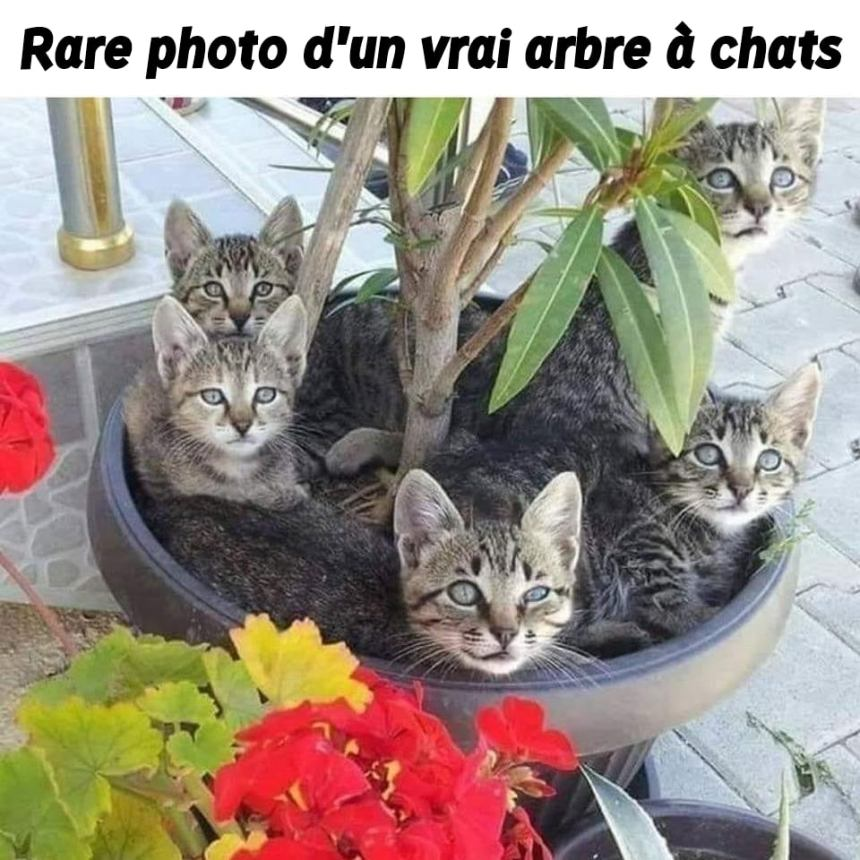 Rare photo d'un vrai arbre à chats