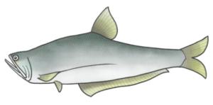 Cá lẹp