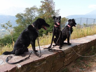 Cosmo, Yassou und Shiva