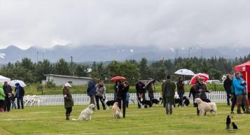 Hundasýning 23.07 2016 í Víðidalnum nr 1 332