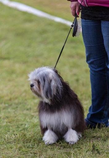 Hundasýning 24.07.2016 í Víðidalnum 251