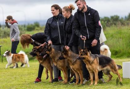 Hundasýning 24.07.2016 í Víðidalnum 999