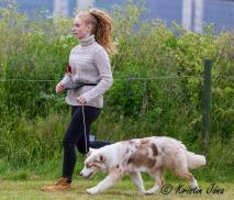 Hvolpasýning 22.07 2016 í Víðidalnum 286