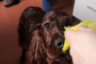Spruchbild mit Hund der an etwas zerrt