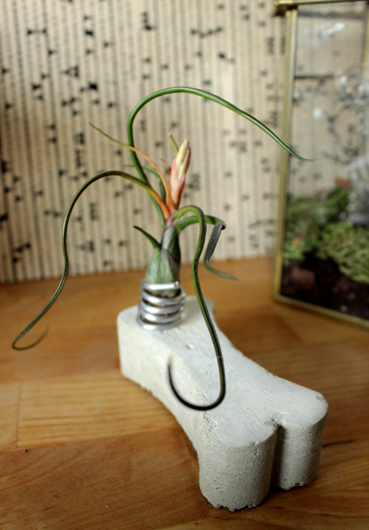 DIY Luftpflanzen Beton Halterung