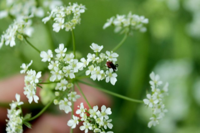Fruelingsphoto mit einer Zecke auf einer Blume