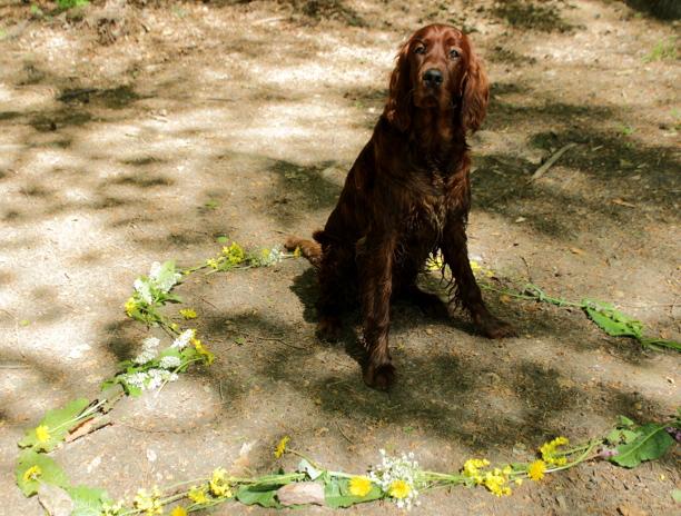 Hundephoto auf dem ein Hund in einem Herz aus Blumen sitzt