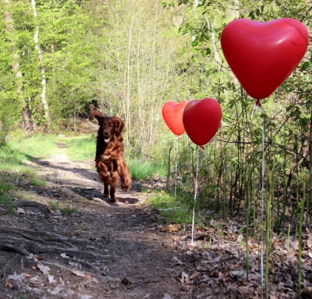 Hundephoto bei der ein Hund in einer Luftballonstraße rennt
