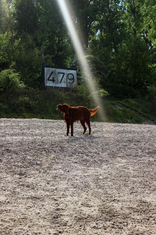 Hund am Hundestrand in Oppenheim