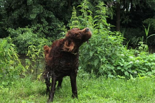 Schüttelphoto mit einem Hund