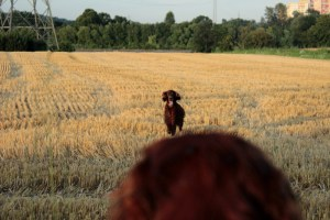 Verlorensuche Dummytraining Hundesport