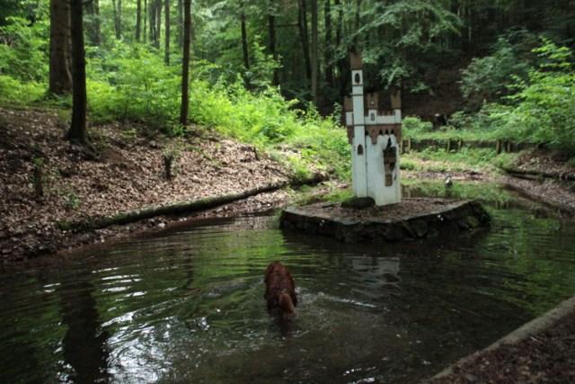 Wandern mit Hund Ausflugsziel Odenwald Kind und Hund
