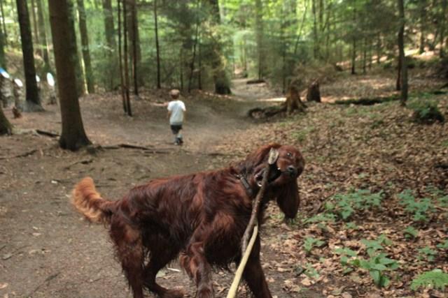 Wandern mit Hund Odenwald Hundeblog