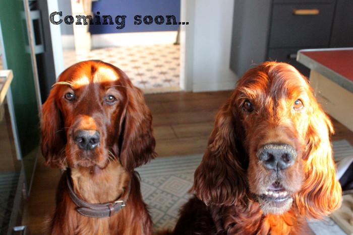 Basteln fürs Fernsehen - Hundespielzeug selbermachen