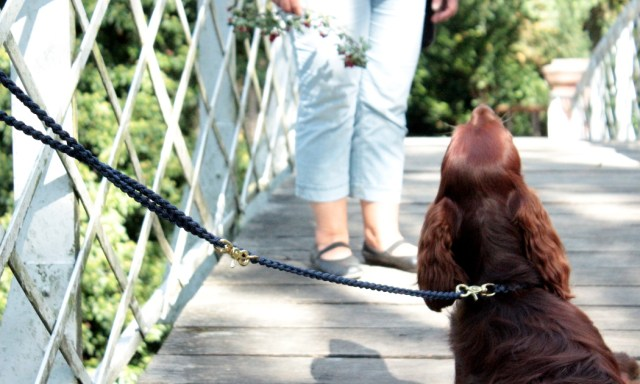 molly-and-stitch-hundeaccessoires-hundeleine-tauleine-hundeblog