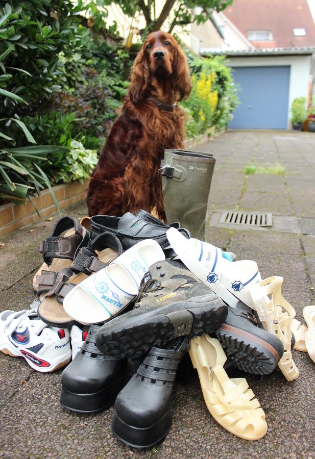 Schuhe spenden für den Tierschutz