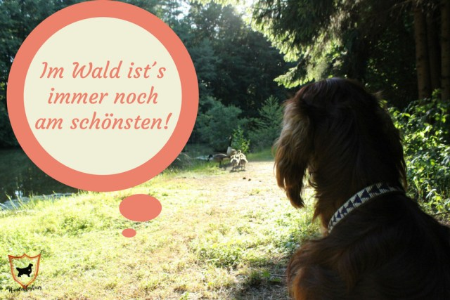 Erfahrungsbericht Tierkommunikation