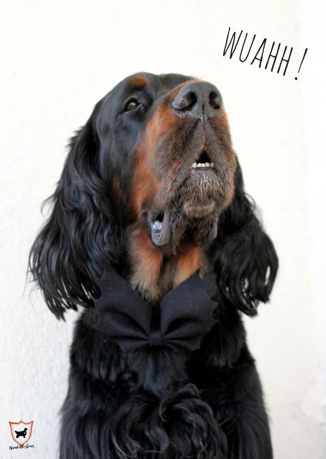 Hunde Accessoires für Halloween