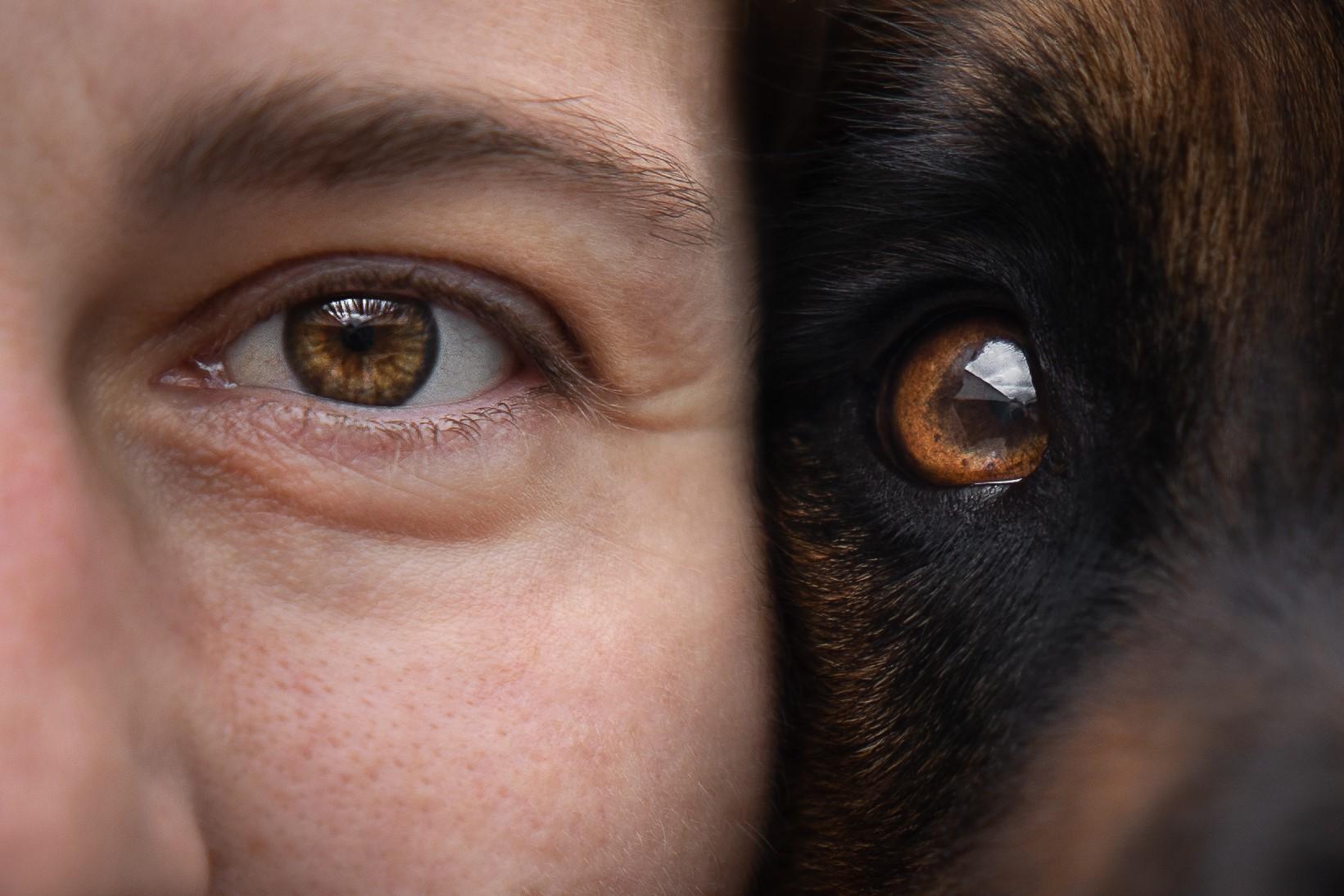 Eye-Bild Charlie und Sylvie