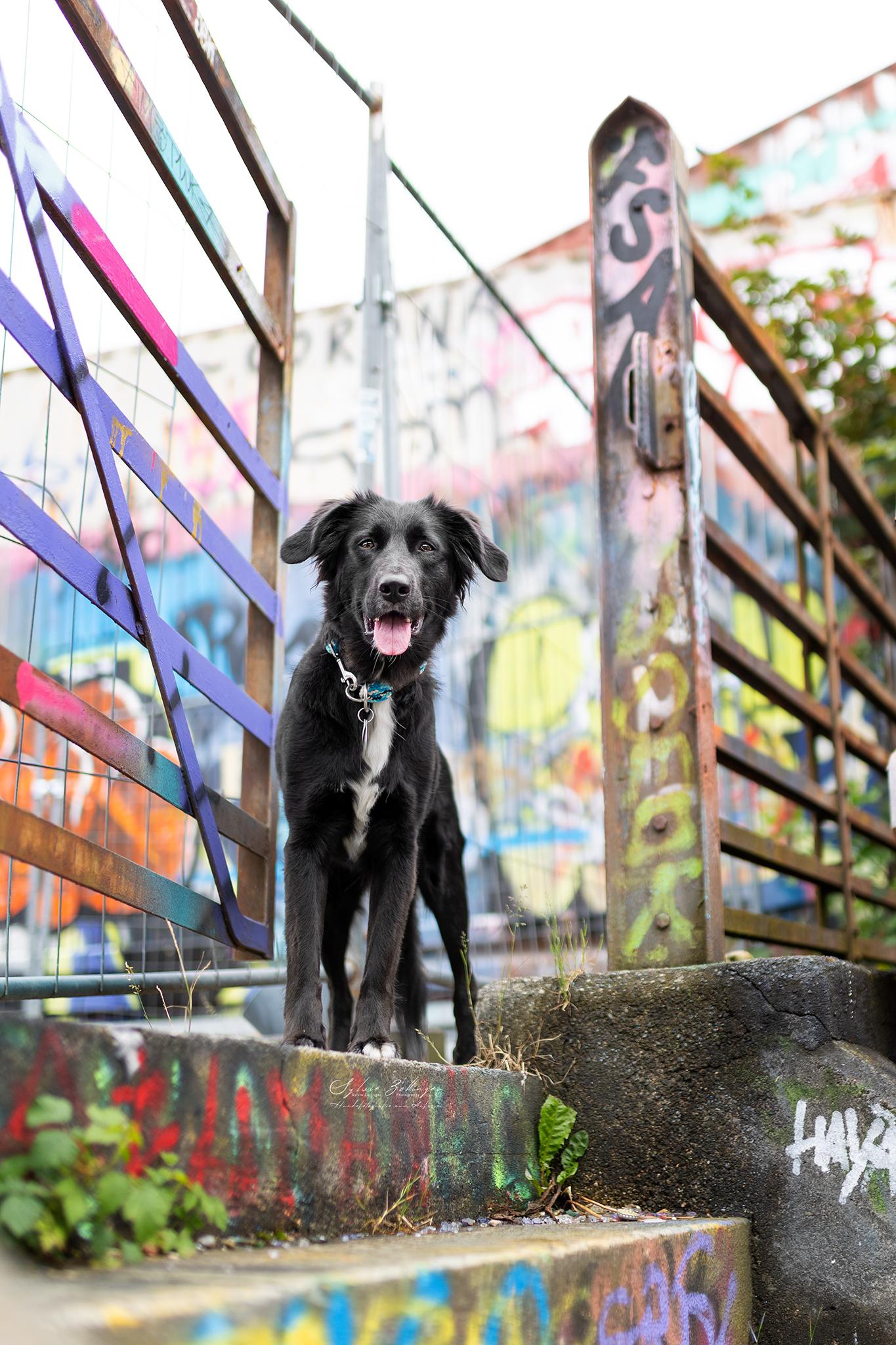 Hundefotografin Mu%CC%88nchen CS No4 Mali 124Web
