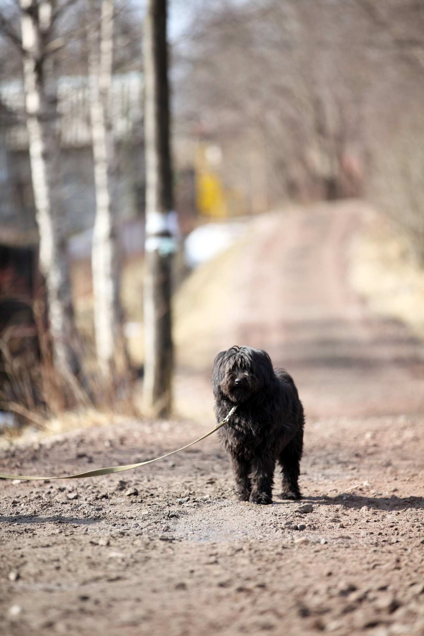 Klaks Glücksfell Hundehilfe Russland