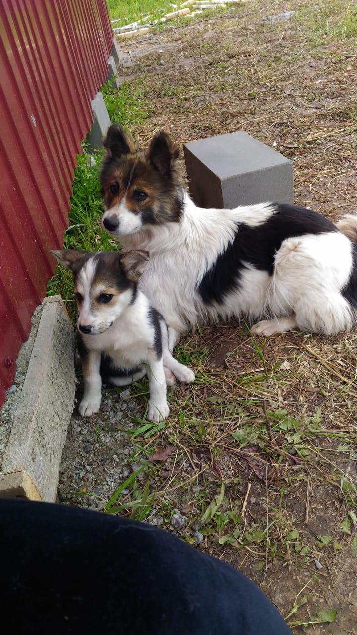 Inoffizielle Eröffnung: Die ersten Hunde sind heute eingezogen