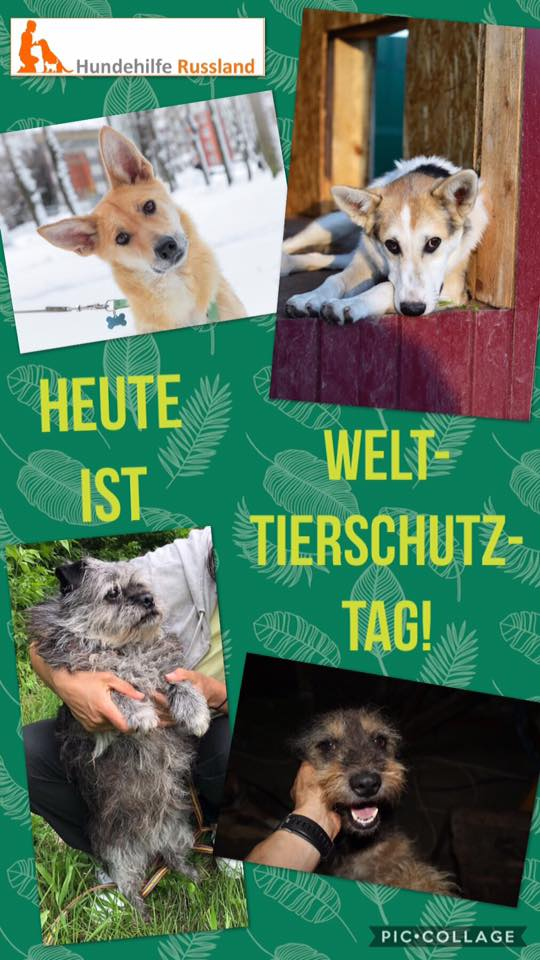 04.10.2018: Welttierschutztag