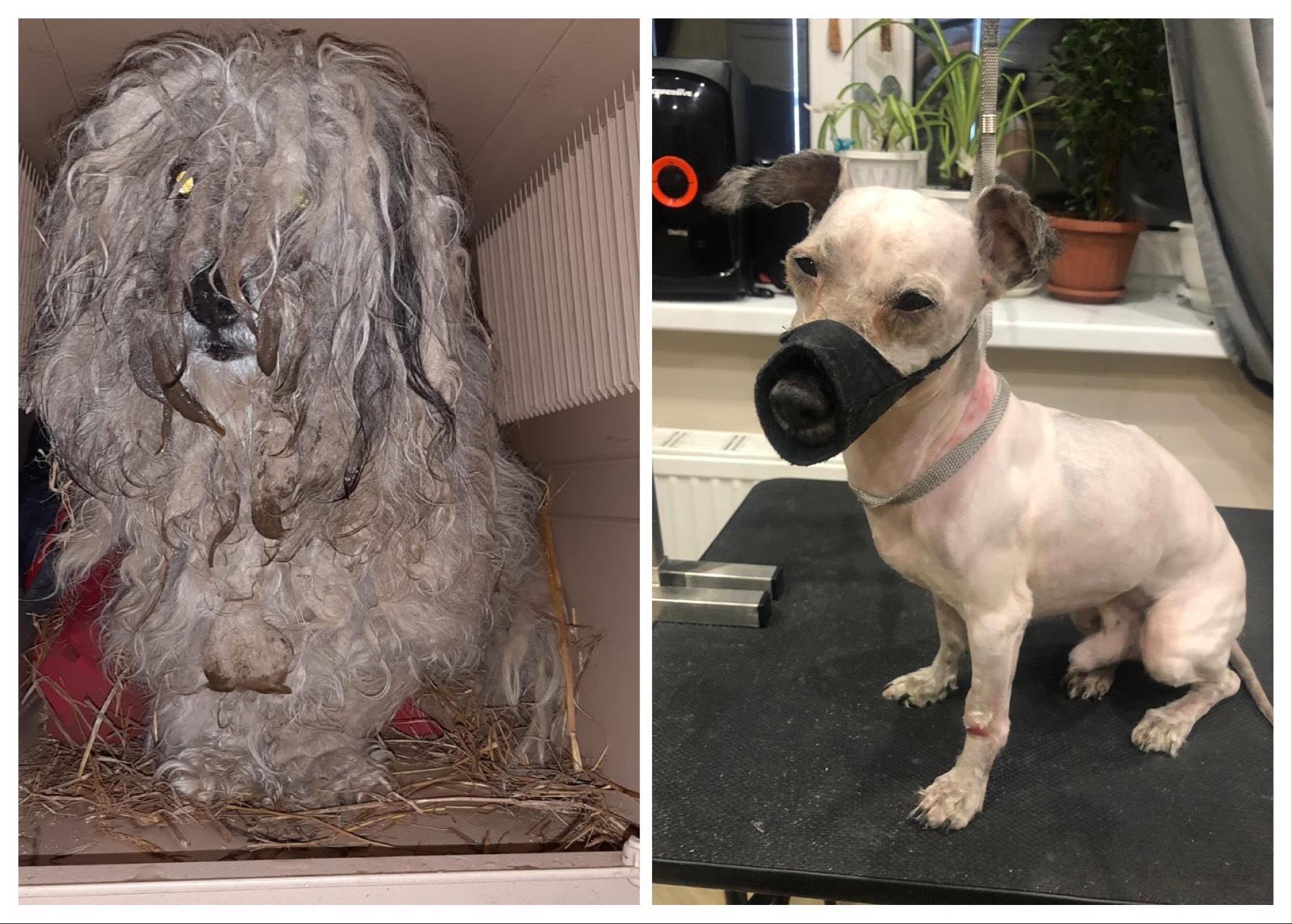 Verwahrloster Hund aus der Lipezker Tötungsstation gerettet