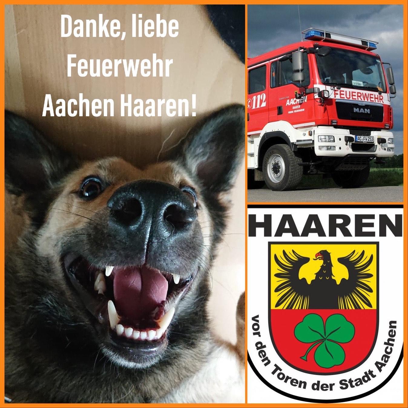 Tannenbaumaktion der Freiwilligen Feuerwehr in Aachen-Haaren