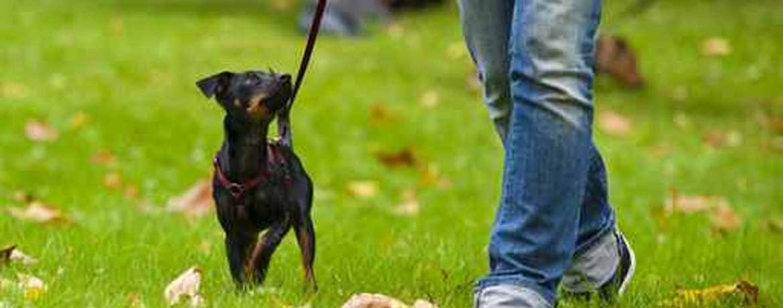 Die richtige Hundeschule finden