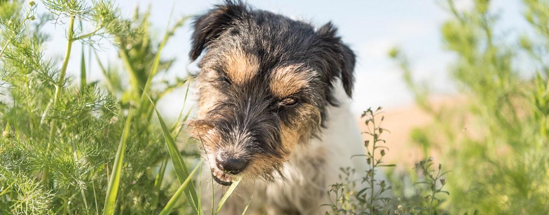 Wenn Es Dem Hund Auf Den Magen Schlagt Was Ubelkeit Und Koliken Alles Bedeuten Konnen Schweizer Hunde Magazin