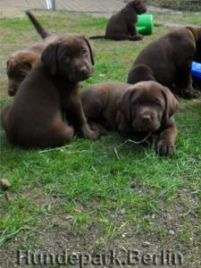 4 Mini Dogs