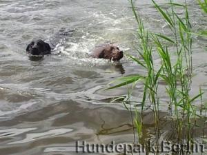 Swim Dog Swim